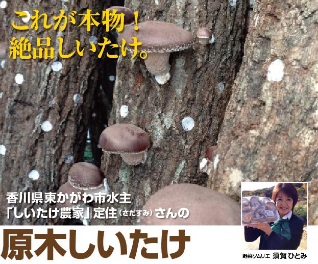 プレミアム原木椎茸